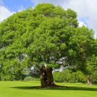 GLS is going green! / GLS wird umweltfreundlich!